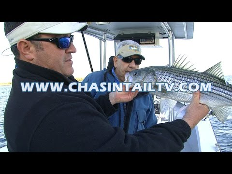 Striped Bass Fishing Bridges Using Soft Plastics | Chasin' Tail TV