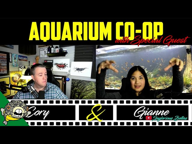 Planted Aquariums, without spending a ton of money.