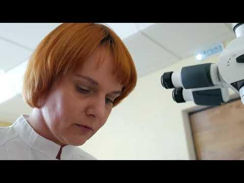 Управление Россельхознадзора по Орловской и Курской областям проконтролировало около 3 тысяч тонн семян и больше миллиона саженцев, ввезённых из зарубежных стран 12.05.2020