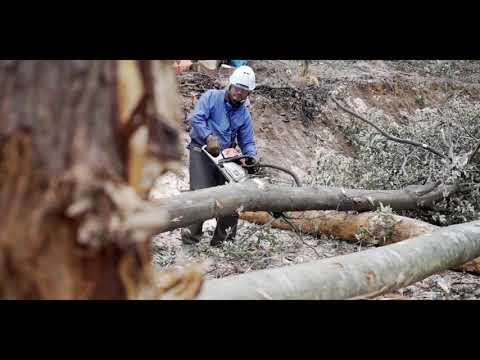 山で働くカッコイイ男達(伸共木材協同組合)