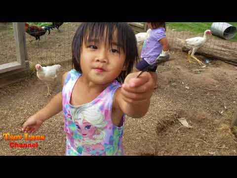 Hmong American's Chicken Farm 8 25 20171