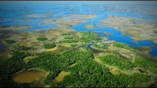 Chassahowitzka Wildlife Management Area: Explore rare sandhill, scrub and hardwood swamp communities.