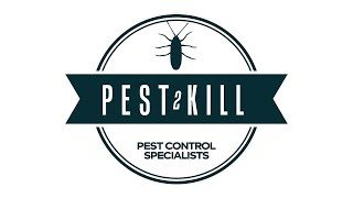 Logo animation I made for pest control company I used to work for.