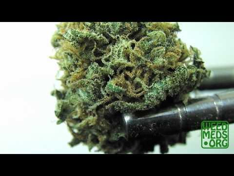 Nuggetry Erkle Wreck Strain from CPA (Medical Marijuana)