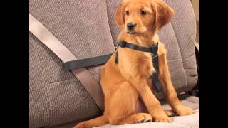 Dog Car Seat Belt Set Of Useful Picture Ideas | Dog Car Seat Belt Dogs
