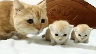 Cute Cats And Kittens & Kitty videos compilation 2018