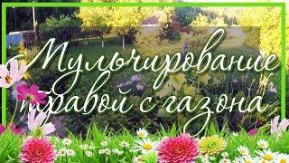 ✔️ Мульчирование цветника скошенной травой 🌿🌱