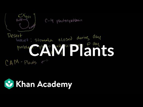Key Differences Between C3, C4 and CAM Photosynthesis