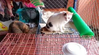 แมวอ้วนน้อยขี้กลัวเหมือนเดิม