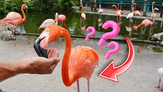 SHOULD WE GET FLAMINGOS?!