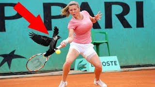 deportes animales en el suelo