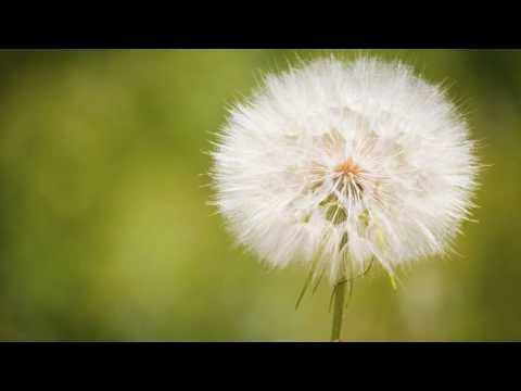 Potencies ใน homeopathy x