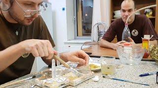 Накуриваем и купаем муравьёв, создаём им новогоднее настроение. Генеральная уборка