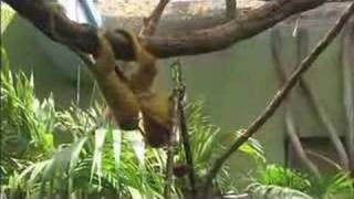 Smithsonian National Zoo (webisode)