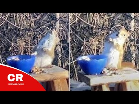 This Drunk Squirrel Ate Too Many Fermented Pears