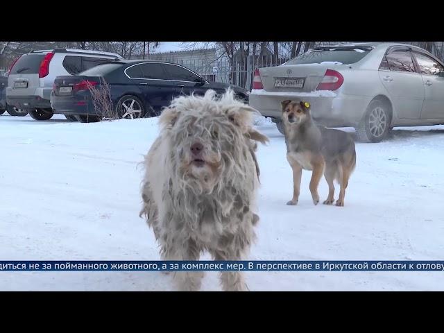 В Приангарье введут электронный учёт бродячих собак