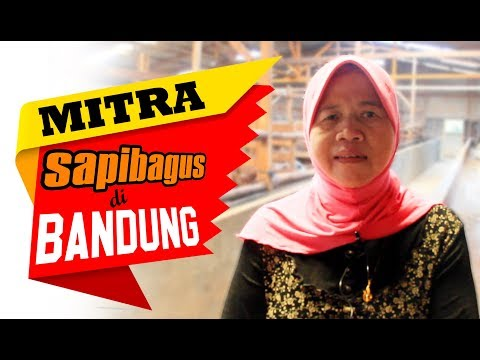 Kandang Mitra Sapibagus di Bandung