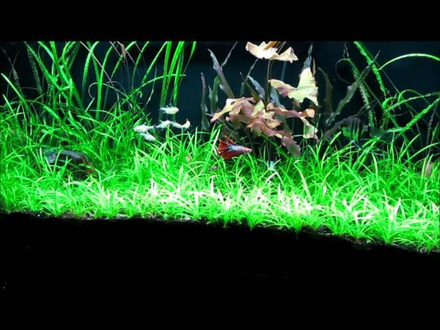My planted tank.  Flight of the betta fish.