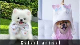 Animals SOO Cute! Cute baby animals Videos Compilation cute mom..cute puppy