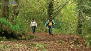 Queimadas Forest Park - Santana, Madeira 2016