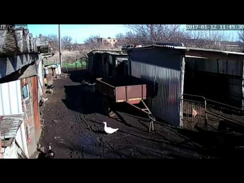 Wifi камеры // Видео наблюдение // Инфракрасная подсветка // Жизнь в деревне