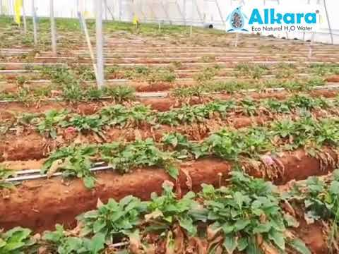 Alka-C7 (A) Alkara Water Softener For Agriculture
