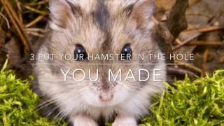What to do if your hamster dies