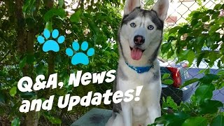 Q&A? Huge News and Updates!