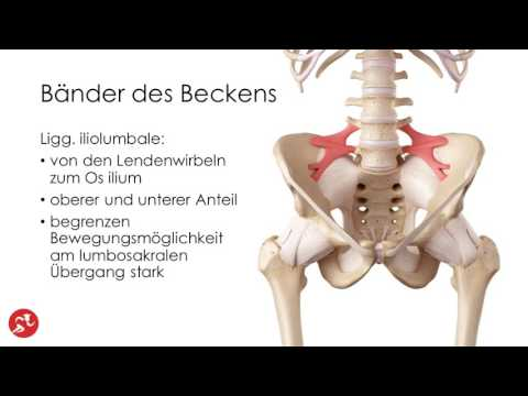 Anhängsel und wund unteren Rücken und keine monatliche