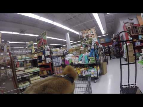 Pet store trip for a fox