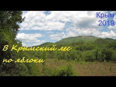 Крым, СУДАК 2019. Прогулка в лес в июле, набрали яблок