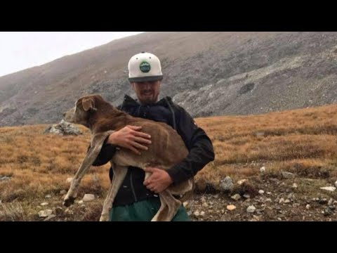 Dog Lost During Mountain Hike Reunites With Owner 6 Weeks Later