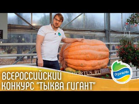 , title : 'Гигантская тыква / Конкурс на самую большую тыкву / Тыква весом 401 кг 16+