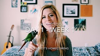 Day 1 through Week 1, Part One: A Parrot's Homecoming, Step by Step Guide