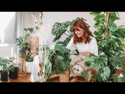 , title : 'make your house plants thrive 🌿indoor plants care tips & hacks