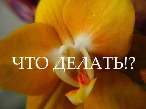 Ну на то он и мутантик)))