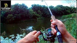 Ловля рыбы на реке красивая меча тульская область отдых
