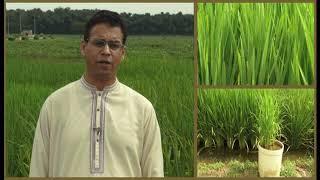 پی اے آر سی کے زرعی سائنسدان ڈاکٹر شوکت علی کا اظہار خیال