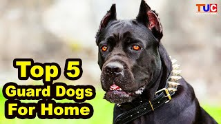 Top 5 Guard Dog Breeds For Home : Guard Dogs : TUC