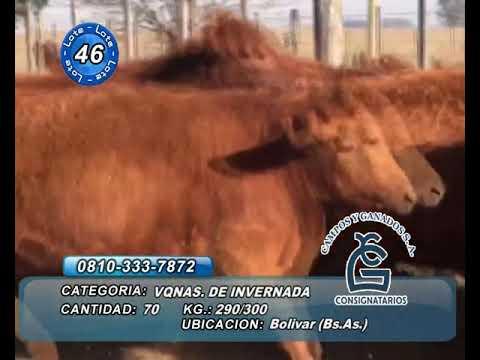 Lote VQ PARA MADRE - Bolivar Bs As