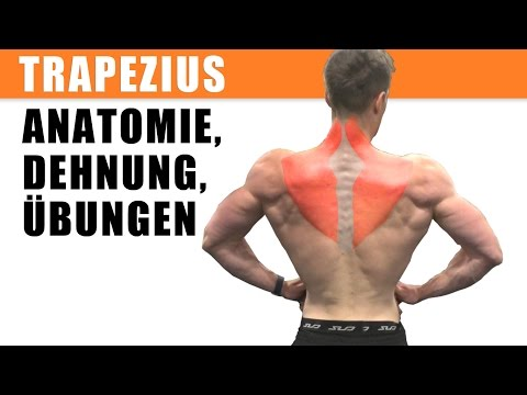 Die Gründe der Schmerzen in recht der Seite des Rückens