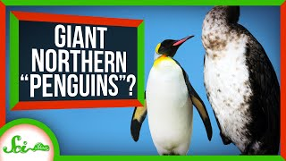 The Northern Hemisphere's Very Own Giant Penguins (Sort Of)
