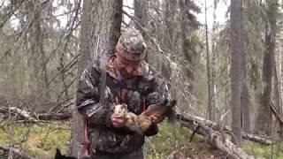 В Сибирь  на охоту с лайкой