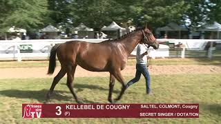 Video  de KELLEBEL DE COUGNY #1