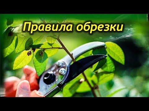Обрезка, Прищипка, Омоложение комнатных растений! Как правильно обрезать растения!