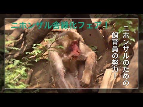 【熊本市動植物園】ニホンザル舎緑化フェア中!