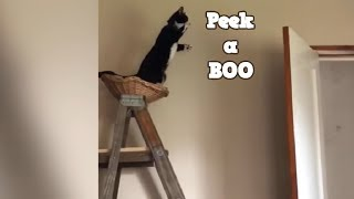 TRY NOT to LAUGH Animals FUNNY PET FAILS Compilation   Ep.2