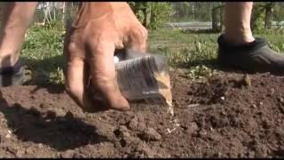 Эффективные средства и способы борьбы с муравьями на садовом участке видео