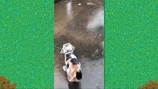 animal crossing city folk rain music - TH-Clip