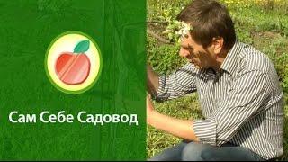 Смотреть онлайн Возможно ли спасти поврежденную яблоню